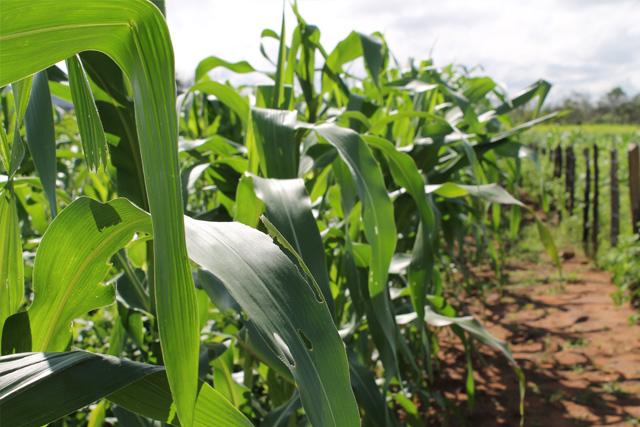 Santana do Piauí - Agricultura